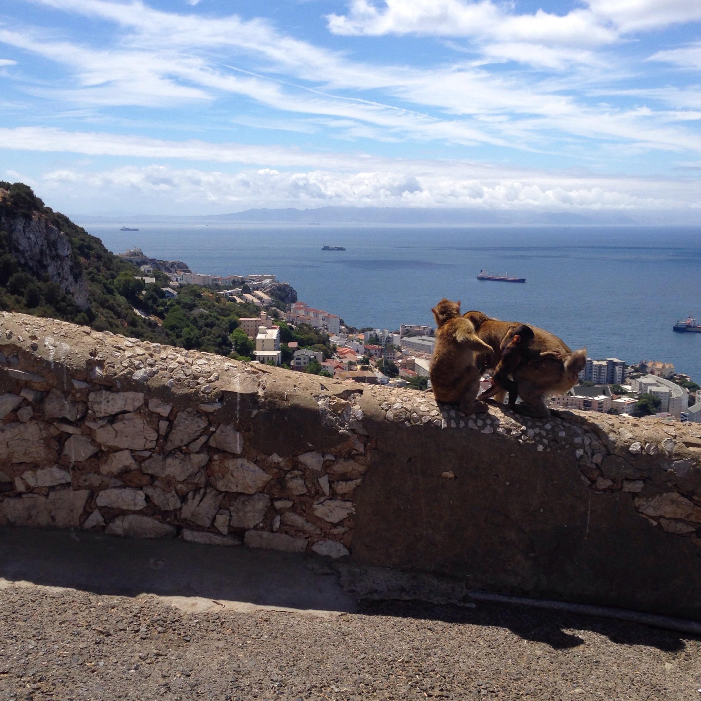 Gibraltar Africa Affen Monkey www.diewunderbarewelt.com