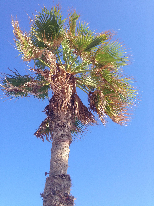 Palmen Palmtrees www.diewunderbarewelt.com Valencia
