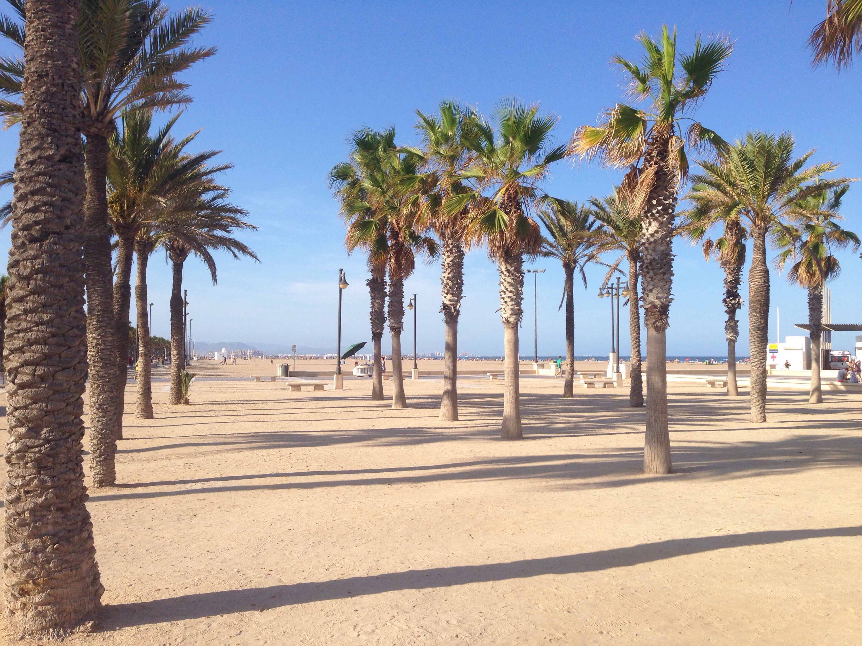 Valencia Palmtrees Palmen www.diewunderbarewelt.com