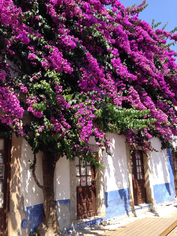 Blumen Óbidos www.diewunderbarewelt.com